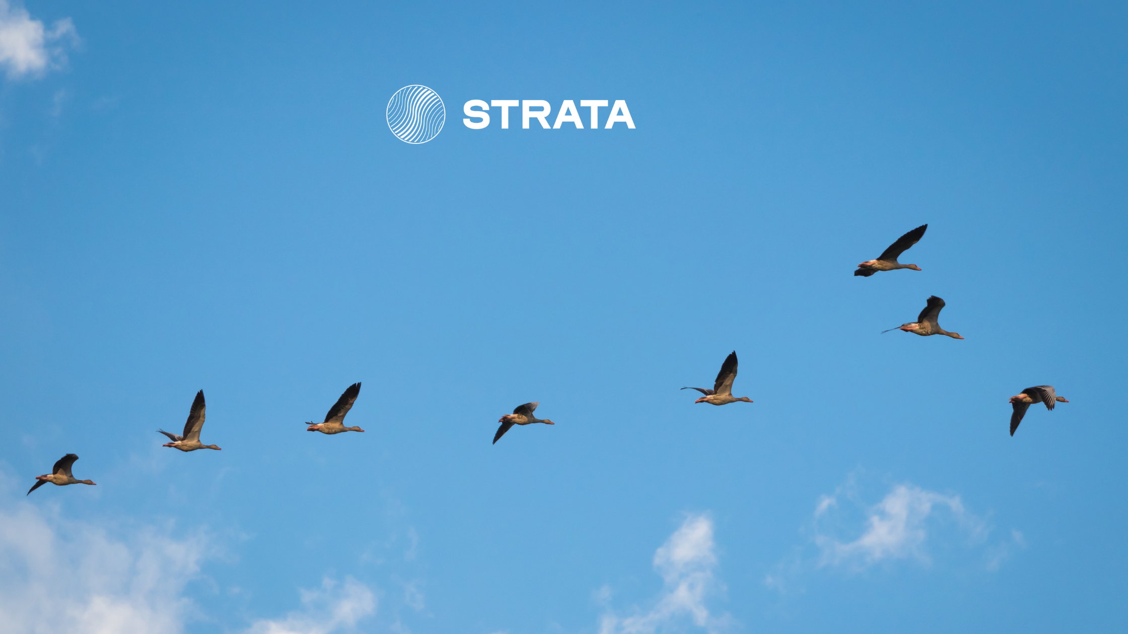 Geese migrating and clouds photo